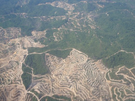 Air view of Borneo
